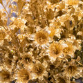 Golden artificial flowers for Christmas decorations. Royalty Free Stock Photo