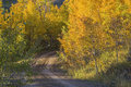 Golden aspen and country dirt road Stock Photography