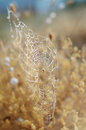 Golden autumn background. Spider network and snails in dew drops under morning sun rays. Seasonal backdrop for your Royalty Free Stock Photo