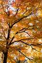Golden Autumn Branches Royalty Free Stock Photos