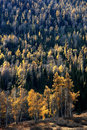 Golden autumn forest Stock Photography