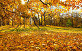 Golden autumn in moscow beautiful landscape the park Royalty Free Stock Images