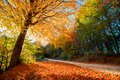 Golden autumn path colorful in a forest during season Royalty Free Stock Photography