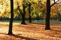 D'oro alberi