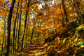 Golden Autumnal Trees In The F...