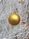 Golden ball white tree decorated with Royalty Free Stock Images