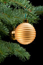 Golden baubles on pine branch Royalty Free Stock Image