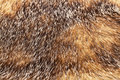 Golden and brown fur texture Royalty Free Stock Photo