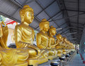 Golden buddas Stock Photography