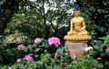 Golden Buddha in garden Royalty Free Stock Photo