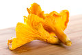 Golden chanterelle fungus close up Stock Image