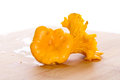 Golden chanterelle fungus ingredient Stock Image