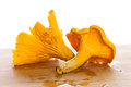 Golden chanterelle fungus macro Stock Photography