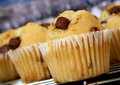 Golden chocolate chip muffins baked in the kitchen Royalty Free Stock Images