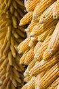 Golden corn cobs hanging to dry (vertical) Stock Photos