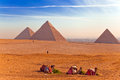 Golden Sahara with Camels and Pyramids Royalty Free Stock Photo