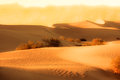 Golden desert dunes sunset over mesquite of death valley Royalty Free Stock Photo