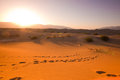 Golden desert dunes sunset over mesquite of death valley Stock Image