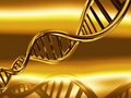 Golden DNA strands Stock Images