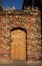 Golden Doorway. Stock Photo