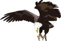 Golden eagle illustration of an in flight with wings spread Stock Image