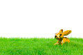 Golden easter bunny sitting in bright field isolated on white Stock Images