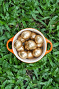 Golden easter eggs in a bowl on grass Royalty Free Stock Photos