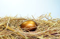 Golden egg on a bed of straw Stock Image