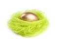 Golden egg is in the nest of green sisal fibre Royalty Free Stock Photo