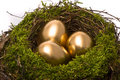 Golden eggs in a nest Stock Images