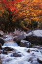 Golden fall forest and stream Royalty Free Stock Photo
