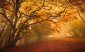 Golden fall season forest autumn autumnal Stock Photo