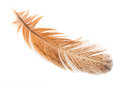 Golden feather Royalty Free Stock Photos