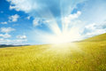Golden field with sunshine in Tuscany Italy Royalty Free Stock Photo