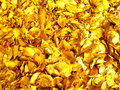 Golden foliage Stock Photos