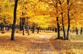 Golden forest in autumn season path the during calm mood atmosphere Royalty Free Stock Image