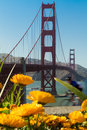 Golden gate bridge Imagem de Stock Royalty Free