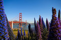 Golden gate bridge and flowers Stock Photo