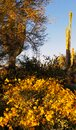 Golden glow in the Desert Royalty Free Stock Photo