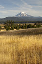 Golden grassland countryside mount adams mountain farmland lands mt looms over lush ranch land in washington state Stock Images