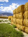 Golden Hay Royalty Free Stock Photos