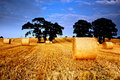 Golden hay bales Stock Photo