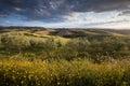 Golden Hedgerow