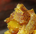 Golden honeycomb Royalty Free Stock Images