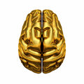 Golden human brain overhead view of showing left and right hemispheres Royalty Free Stock Images