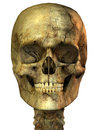 Golden human skull Royalty Free Stock Photo