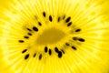 Golden kiwi slice yellow backlit Stock Photo
