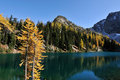 Golden Larch trees and Blue Lake Trail Royalty Free Stock Photo