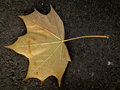 Golden leaf lonely texture on the ground Stock Image