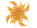 Golden leaves decoration Royalty Free Stock Photo
